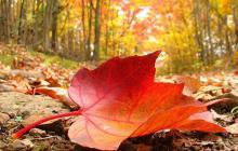 ¡Equinoccio de otoño!