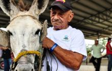 31 equinos obtienen su jubilación y dejan el yugo de la carreta