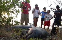 Encuentran dos delfines sin vida en Playa Mendoza