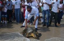 Protagonista de Diomedes liberó la primera tortuga satelital en La Guajira