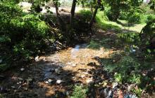 Nuevo Parque Botánico y canalización de arroyo deben estar listos en diciembre