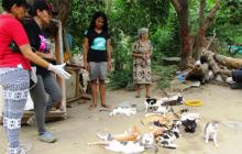 Rescatan 140 gatos callejeros en Jardín Botánico del suroriente