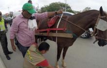 Continúan operativos para garantizar buen estado de caballos cocheros
