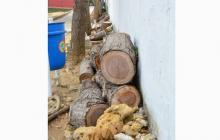 Ambientalistas exigen investigar arboricidio en el norte de Barranquilla