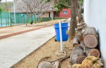 Por arboricidio, Damab inició proceso sancionatorio contra Liga de Tenis del Atlántico