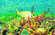 San Andrés y Providencia tienen el 77% de la extensión total de áreas marítimas protegidas por el Sistema Nacional de Parques de Colombia.