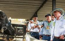 En la fotografía el Ministro Aurelio Iragorri valencia, con uno de los ejemplares exhibidos en la Feria Ganadera de Sabanalarga, Atlántico, en la que hizo un recorrido y se reunió con ganaderos.