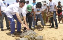 En La Guajira, 32 tortugas marinas retornaron a su hábitat