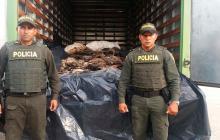 Incautan en Córdoba 760 pieles de burro que serían enviadas al extranjero