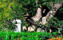 Un experto restaurará la estatua de Bolívar que la brisa derribó en la Quinta
