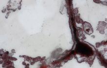 Encuentran restos fósiles más antiguos de vida en la Tierra