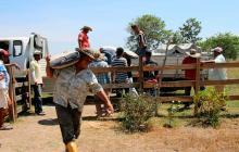 Familias restituidas en Montería tienen centro de acopio para producir 900 litros de leche diarios