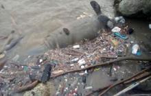 Aparece manatí muerto a orillas de Bocas de Ceniza