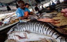 En video | Pescando al 'rey' de la Semana Santa