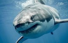 Tiburones vuelven aparecer en escena y de villanos