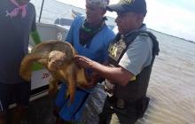 Investigan muerte de tortugas en Santa Verónica por efectos del tsunami
