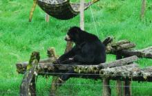 Corte Suprema ordena libertad para oso 'Chucho'