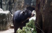 'Chucho' ya disfruta de su hábitat en el Zoo