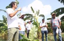Expertos israelíes exploran para cultivar palma de dátil en La Guajira