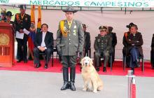 'Dogui', el perro de la Policía que se gradúa con honores