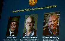 Los ganadores del Premio Nobel de Medicina proclamados este lunes.