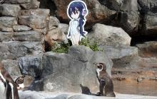 "Japón llora la muerte del pingüino ""flechado"" de una réplica de 'Hululu'"