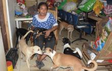 Polémica en barrio Kennedy por 42 perros que viven en una misma casa