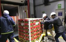 De Cartagena envían primer embarque con 34 toneladas aguacate Hass hacia EEUU