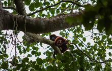 Mono colorado en el Parque Natural Regional Los Rosales, una de las áreas protegidas en Atlántico.