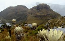 Un informe demuestra alarmante situación de los ecosistemas del país
