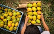 Más productos del agro buscan ingresar a EEUU