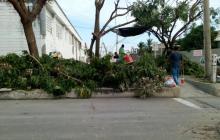 Vecinos rechazan poda de árboles en el barrio La Concepción