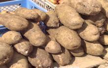El ñame un tubérculo, vinculado de manera profunda con la cultura alimenticia de los Montes de María, del cual han vivido familias campesinas por mucho tiempo.