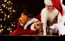 Papá Noel en su tradicional trineo en una imagen distribuida por el sitio web que lo sigue anualmente en la entrega de regalos.
