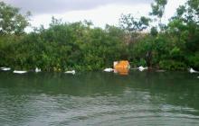 Riesgo ambiental por pieles arrojadas en bahía de Cartagena