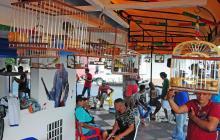En el barrio San Felipe, también se congregan canaricultores.