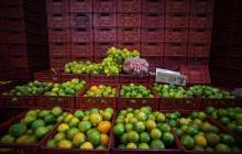 Mercado de Panamá se abre a los cítricos de Colombia