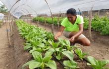Con las miles de operaciones de crédito realizadas a través de esta entidad financiera, los pequeños productores agropecuarios del país han tenido un gran crecimiento.