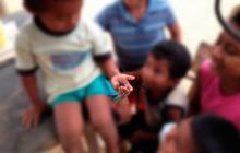 Bautizan a nueva especie de escarabajo en honor a Wayuu