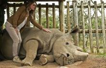 Muere Sudan, el último rinoceronte macho blanco de Kenia