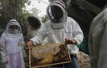 Cultivos ilícitos y minería ilegal son reemplazados por la apicultura