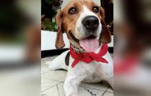 Mascotas Wasapea | Ayúdanos a encontrar a 'Lucas'