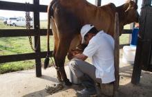 Exdesplazados piden arreglo de vía para sacar 8850 litros de leche hasta Montería