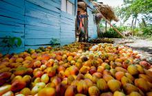 Las frutas y las hortalizas son los alimentos que más se desperdician en el mundo.