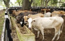 Colombia está a un paso de poder exportar carne bovina a China