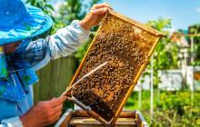 Las abejas no atacan, se defienden