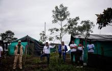 Miembros de la Farc ubicados en las zonas rurales.