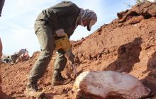 Descubren en Argentina dinosaurio gigante de más de 200 millones de años
