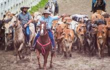 Proyecto de repoblamiento bovino en el Atlántico