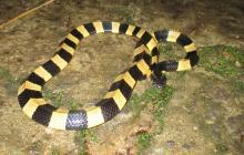 Mujer muere tras ser mordida por una serpiente que había comprado por internet
